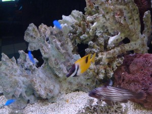 Aquarium_and_Bundles_032_(Large)